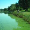 Le Lac de Maine envahi par les algues bleues